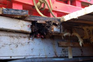 MFV conversion deckbeams, knees and beamshelf repairs